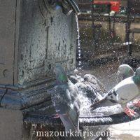ワルシャワ新市街広場鳩の水浴び