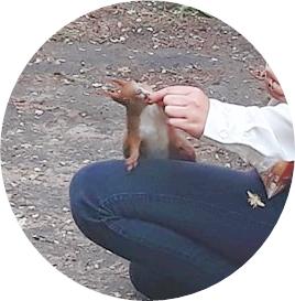 ワジェンキ公園のリス