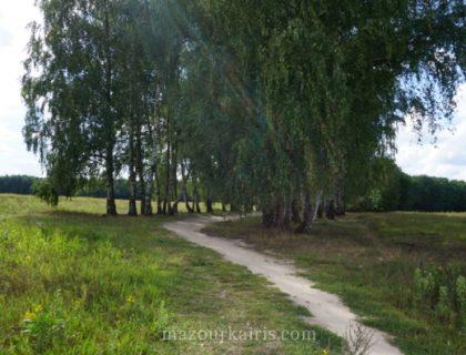 ポーランド生活サイクリングピクニック