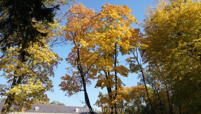 ポーランドワルシャワ黄金の秋の時期ワジェンキ公園