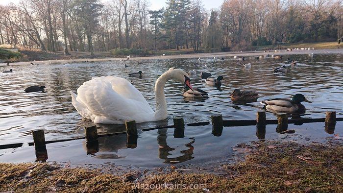 ワルシャワ観光ワジェンキ公園リス鴨白鳥
