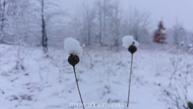 ポーランド冬の日常生活