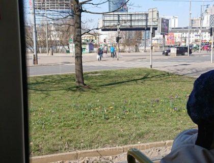 ポーランド観光ワルシャワトラムクロッカス