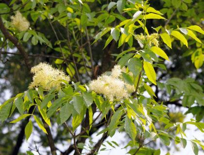 ポーランドの植物・木