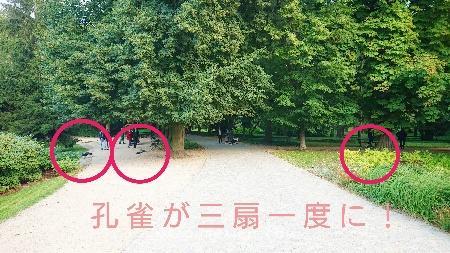 DSC_7036-01_ワジェンキ公園ショパン像ポーランドワルシャワ観光リス