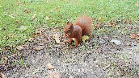 ワジェンキ公園のリスショパンの森ポーランドワルシャワ観光