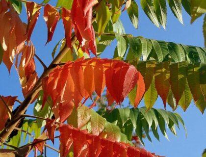 ルスティファナポーランドの秋の木紅葉